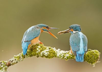 Kingfisher Foodpass