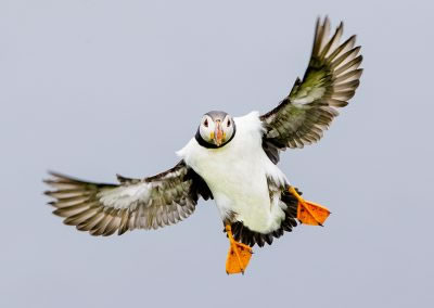 Puffins and Seabirds