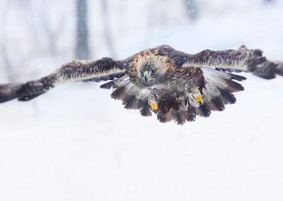 Golden Eagle flight 2