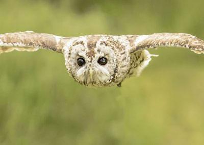 tawney flight