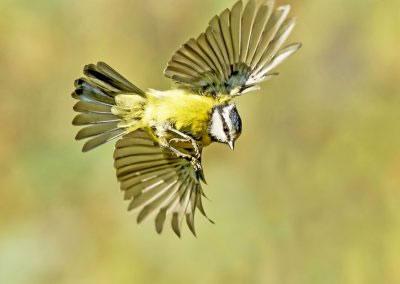 woodlandbirds2620