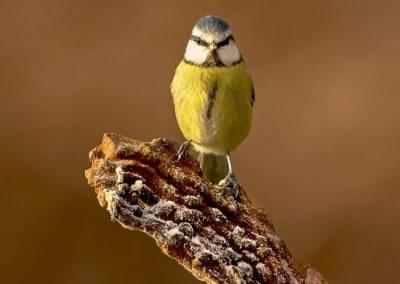 woodlandbirds2621