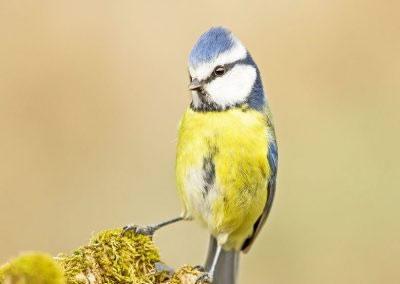 woodlandbirds2622