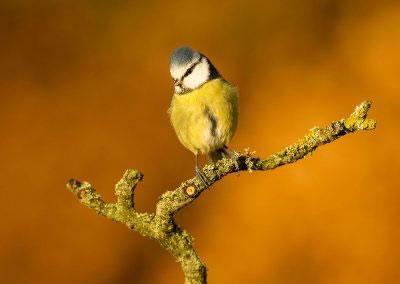 woodlandbirds2623