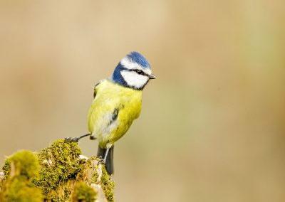 woodlandbirds2625