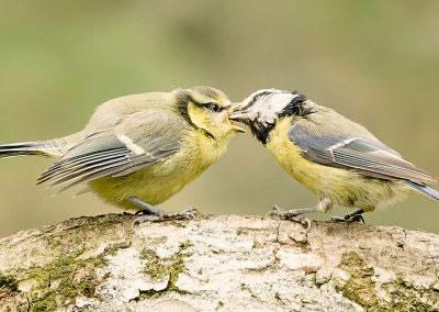 woodlandbirds2627