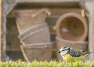 woodlandbirds2630