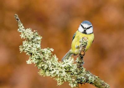 woodlandbirds2632