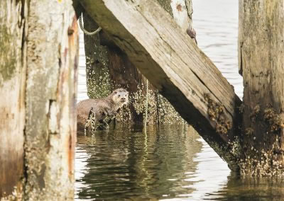 Otter play ground