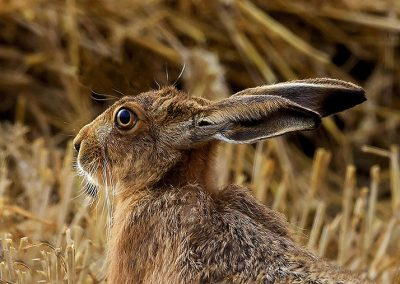 One to One Workshop Hare