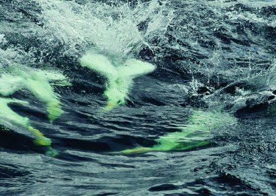 1200 1555 Gannets diving 300 dpi
