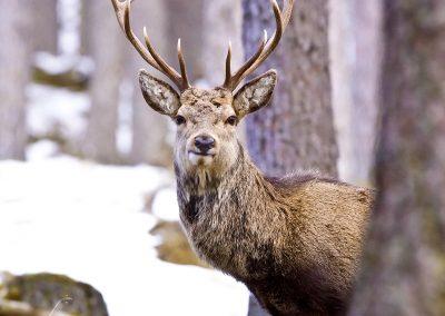 1200 Red Deer IMG_3002
