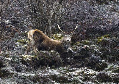 1200 red deer BN3Z3398