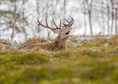 1200 red deer _I4X3184