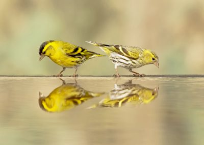 Male and female reflecting