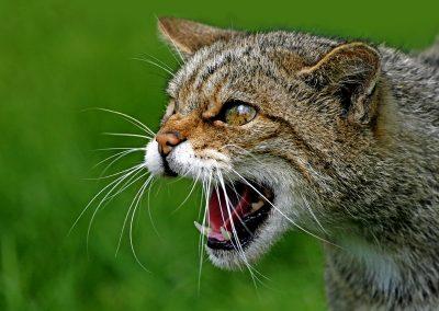 1200 2551 W. CAT HEAD