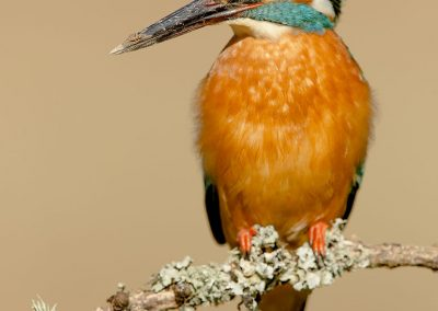 1200 kingfisher _F2T0518