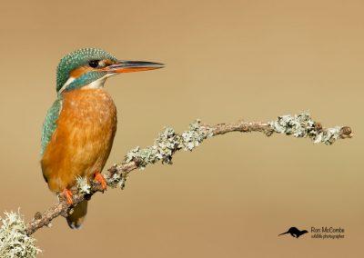 1200 kingfisher _F2T0554