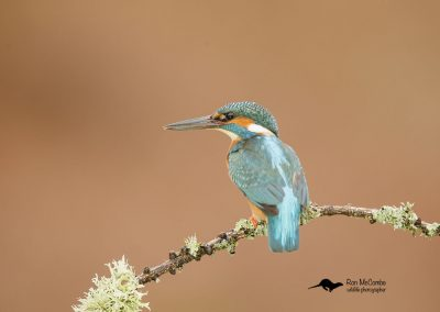 1200 kingfisher _I4X1709