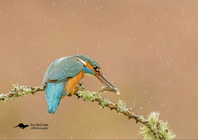 1200 kingfisher _I4X1944