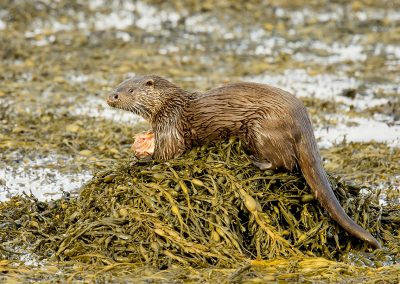14 40 otter fish BI4X1692 copy