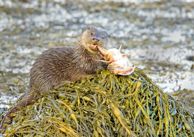 Otter and fish