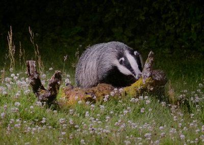 1200 badger _1703991