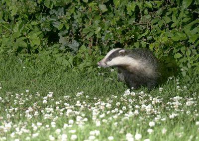 1200 badger _1704804