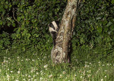 1200 badger _1704984