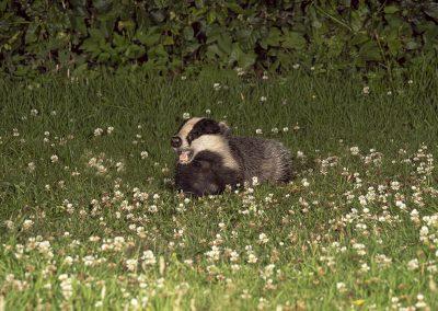 1200 badger _1705292