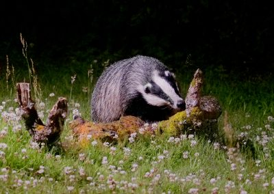 1200 badger log _1693982