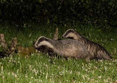 1200 badgers _1705549